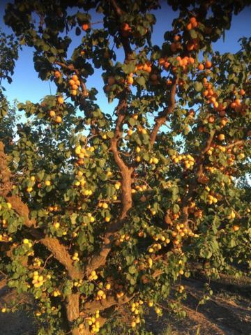 0 Apricot, Patterson, CA 95363 (MLS #18059834) :: Keller Williams - Rachel Adams Group