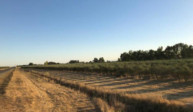 19600 County Road 95, Woodland, CA 95695 (MLS #18066736) :: The Merlino Home Team