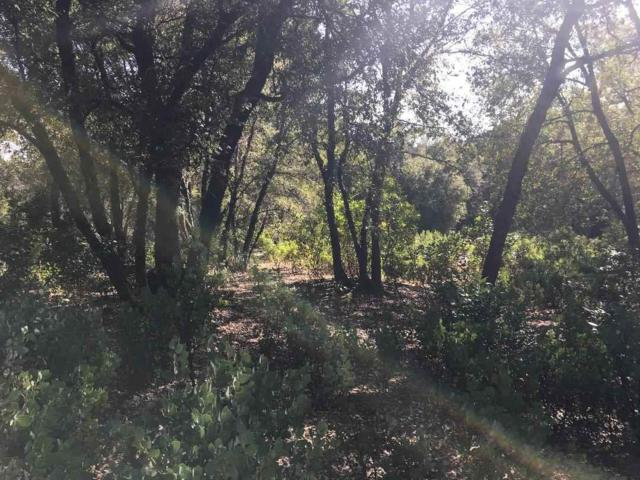 0-Lot 45 Frederick Drive, Pine Grove, CA 95665 (MLS #19005369) :: Dominic Brandon and Team