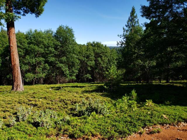 0 Lynx Trail, Pollock Pines, CA 95726 (MLS #19044654) :: Dominic Brandon and Team