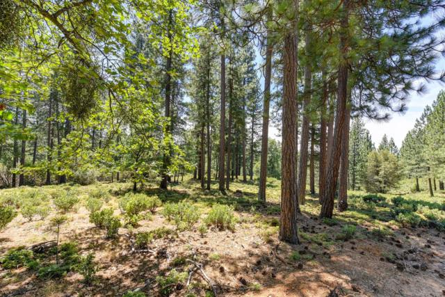 6341 Red Robin Road, Placerville, CA 95667 (MLS #19044865) :: The Del Real Group