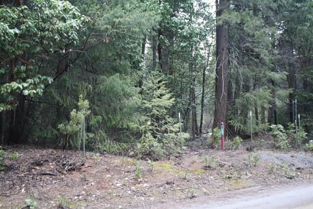 9501 Bear State Road, Georgetown, CA 95634 (MLS #19078279) :: eXp Realty - Tom Daves