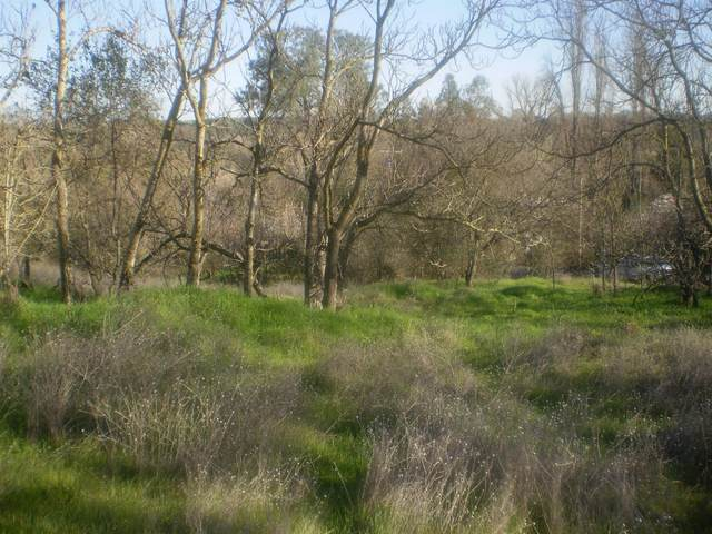 0 Cemetery Road, Knights Ferry, CA 95361 (MLS #20011186) :: REMAX Executive