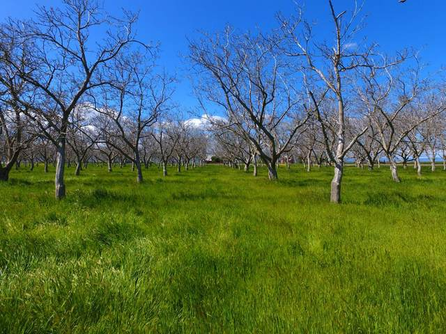 0 County Road 89, Winters, CA 95694 (MLS #20018477) :: Dominic Brandon and Team