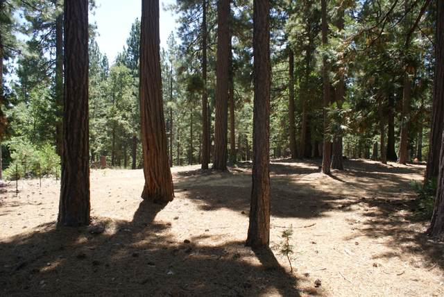 5753 Blue Mountain Drive, Grizzly Flats, CA 95636 (MLS #20043844) :: REMAX Executive