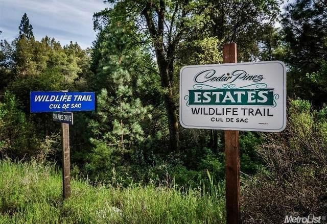 29-A Wildlife Trail, Fiddletown, CA 95629 (MLS #20045126) :: Keller Williams Realty