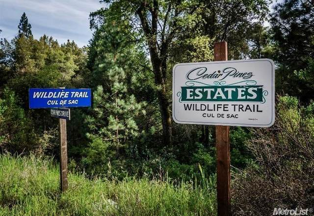 29-B Wildlife Trail, Fiddletown, CA 95629 (MLS #20045135) :: Dominic Brandon and Team