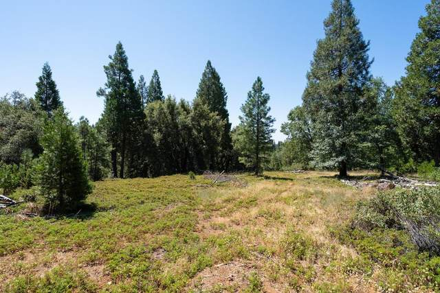 25755 State Highway 88, Pioneer, CA 95666 (MLS #20046268) :: Heidi Phong Real Estate Team