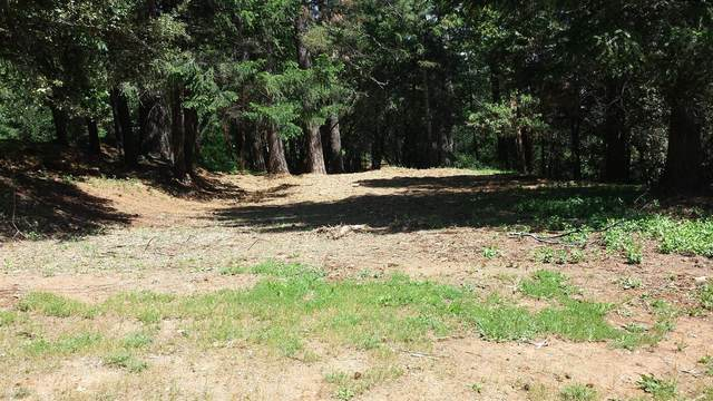 15 Mosquito Ridge Road, Foresthill, CA 95631 (MLS #20052787) :: Dominic Brandon and Team