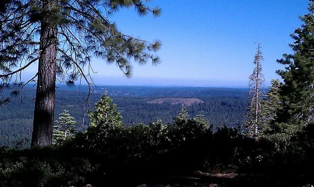 0 National Forest 44, Emigrant Gap, CA 95715 (MLS #20055611) :: Dominic Brandon and Team