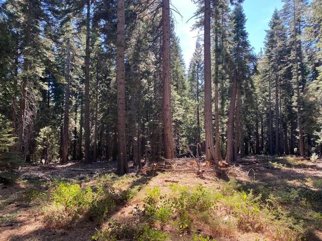 16023 Ophir Silver Road, Nevada City, CA 95959 (MLS #20061578) :: Keller Williams - The Rachel Adams Lee Group