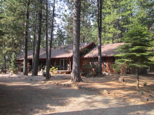 5486 Blue Mountain Drive, Grizzly Flats, CA 95636 (MLS #20065272) :: Heidi Phong Real Estate Team