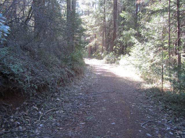 1636 Swansboro Road, Placerville, CA 95667 (#221011343) :: The Lucas Group