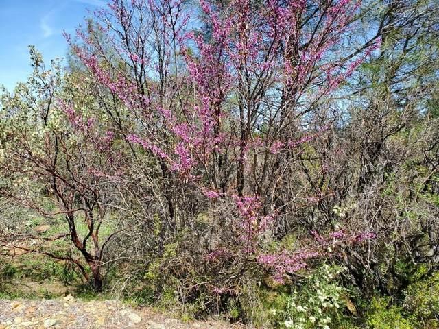 15638 Keson Place, Grass Valley, CA 95949 (MLS #221030066) :: Keller Williams Realty