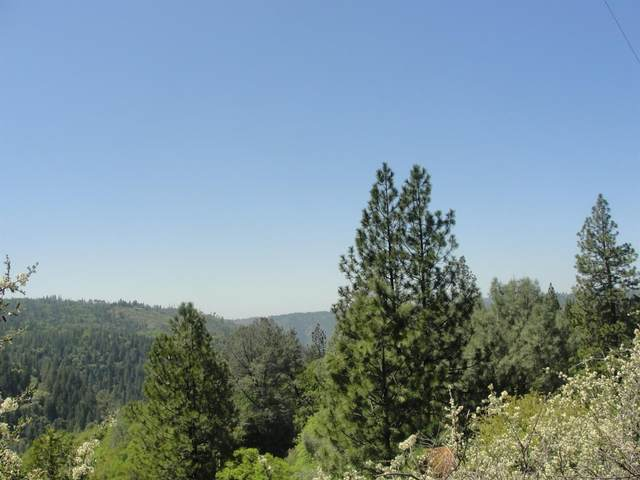 381 Sawyer Lane, West Point, CA 95255 (MLS #221041517) :: Heidi Phong Real Estate Team