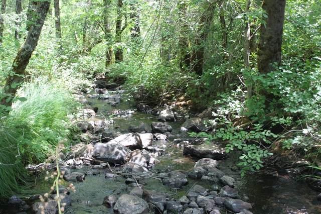 13360 Alderpoint Rd Road, Grass Valley, CA 95945 (MLS #221065105) :: Keller Williams Realty