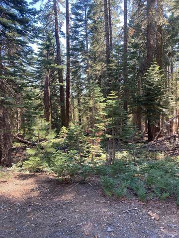 1316 Cleghorn Drive, Bucks Lake, CA 95971 (MLS #221085002) :: Heidi Phong Real Estate Team