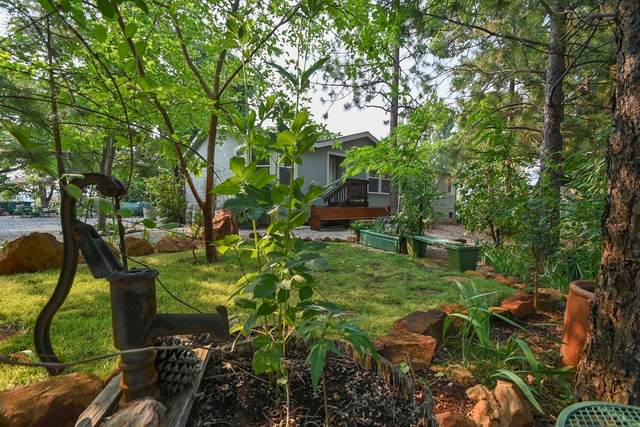 3188 One Eye Creek Road, Placerville, CA 95667 (MLS #221091661) :: The Merlino Home Team