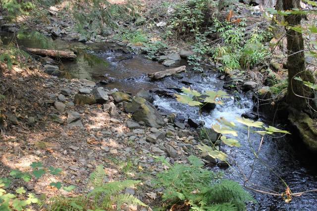 5137 Clear Creek, Placerville, CA 95667 (MLS #221114335) :: DC & Associates