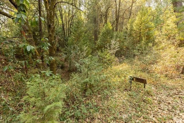 0 Toyon, Pine Grove, CA 95665 (MLS #221120101) :: Keller Williams - The Rachel Adams Lee Group