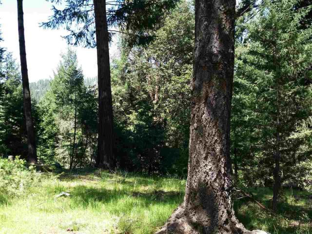 16482 Meadow Vista Drive, Pioneer, CA 95666 (MLS #18600588) :: Heidi Phong Real Estate Team