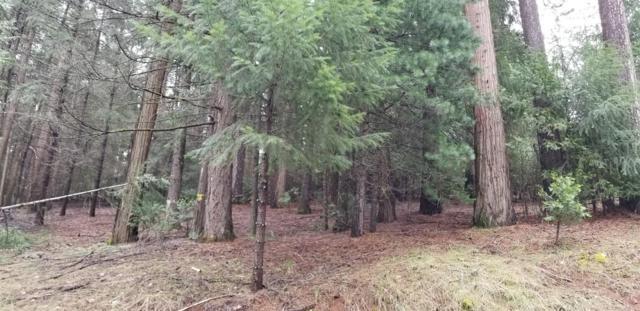 4311 Sierra Springs Drive, Pollock Pines, CA 95726 (MLS #19019729) :: The Del Real Group