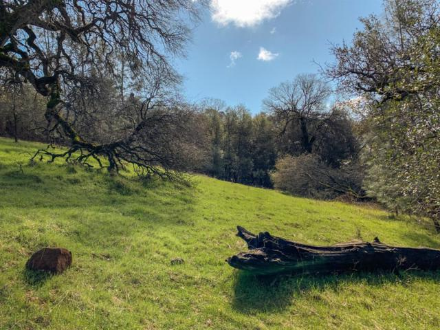 2768 Dyer Way, Placerville, CA 95667 (MLS #19020018) :: The Del Real Group