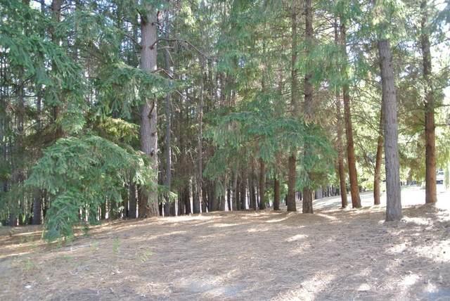 4535 Porta Venare Court, Foresthill, CA 95631 (MLS #20069861) :: Keller Williams Realty
