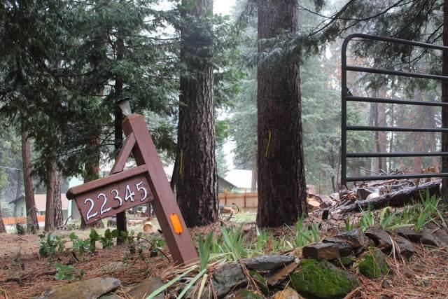 22345 Allan Rd, Volcano, CA 95689 (MLS #221005843) :: eXp Realty of California Inc