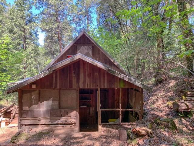 17200 Hale Road, Volcano, CA 95689 (MLS #221046466) :: Live Play Real Estate | Sacramento