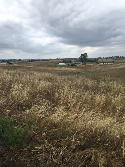 2300 Newman Hill Drive, Ione, CA 95640 (MLS #16601318) :: NewVision Realty Group