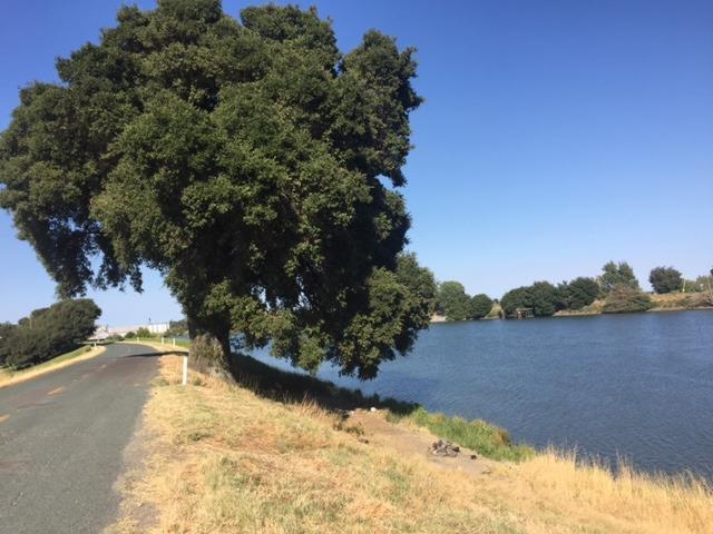 17615 Grand Island Road, Walnut Grove, CA 95690 (MLS #17042075) :: Keller Williams - Rachel Adams Group
