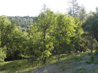 2505 North View - Lot 3 Lane, Placerville, CA 95667 (MLS #17054023) :: REMAX Executive