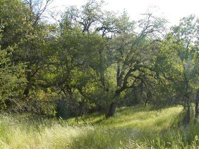 2509 North View - Lot 4 Lane, Placerville, CA 95667 (MLS #17054024) :: REMAX Executive