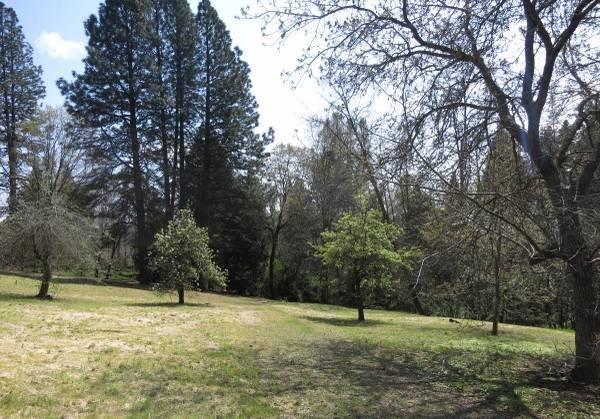200 Collins Lane, Grass Valley, CA 95945 (MLS #18009148) :: Keller Williams - Rachel Adams Group