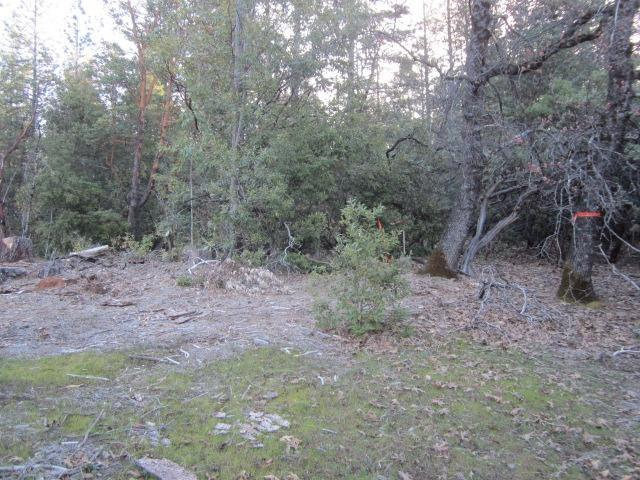 3321 Lupine Lane, Placerville, CA 95667 (MLS #18019804) :: Team Ostrode Properties