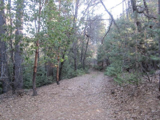 6222 Pine Needle Lane, Placerville, CA 95667 (MLS #18019808) :: Keller Williams - Rachel Adams Group