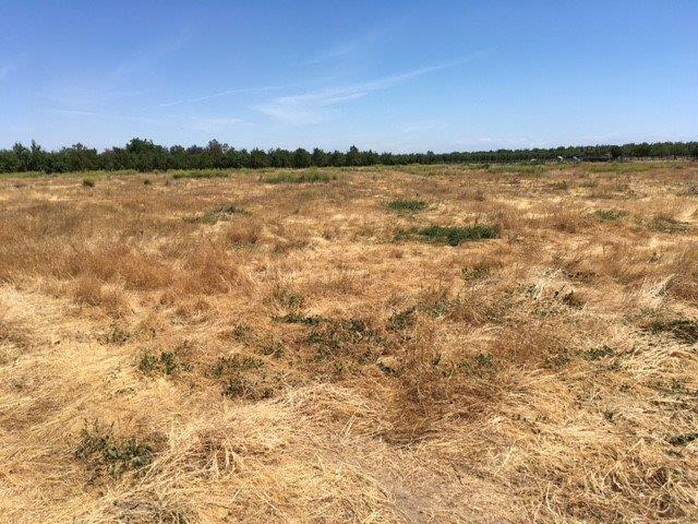 0 County Road 4, Dunnigan, CA 95937 (MLS #18034231) :: NewVision Realty Group