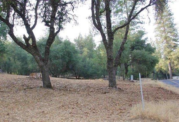 21930 Lyons Bald Mountain Road, Sonora, CA 95370 (MLS #18055764) :: Dominic Brandon and Team