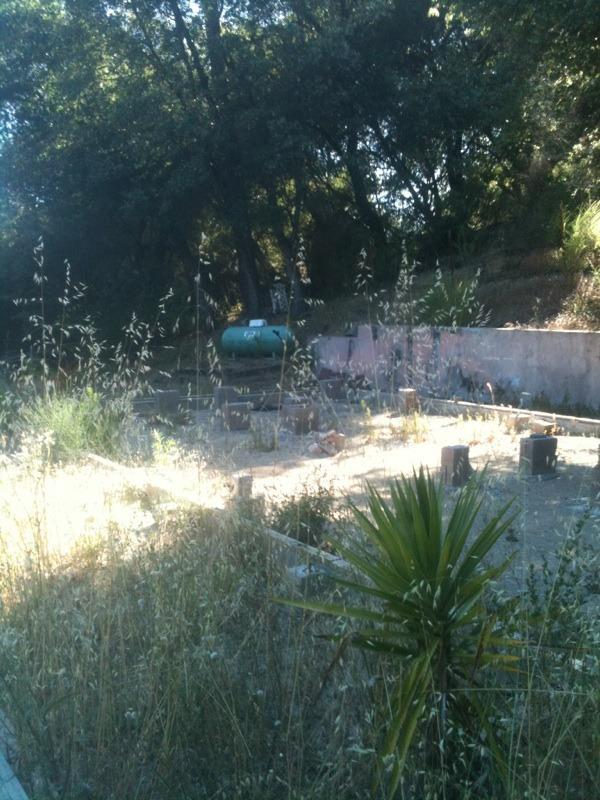 14528 Holly Lane, River Pines, CA 95675 (MLS #19018366) :: Keller Williams Realty