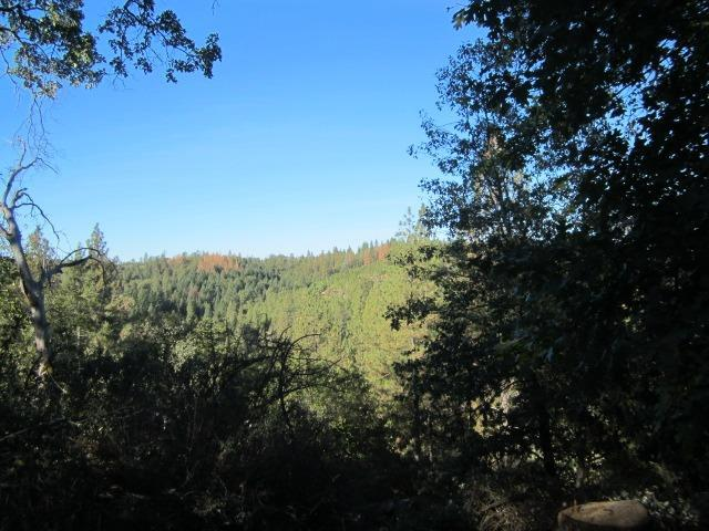 1900 Swansboro Road, Placerville, CA 95667 (MLS #19020931) :: The Del Real Group