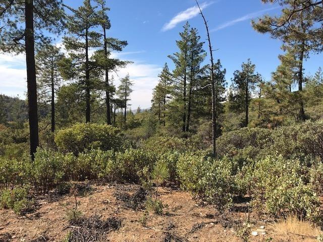 120 Yosemite Springs Road, Groveland, CA 95321 (MLS #19021648) :: Heidi Phong Real Estate Team
