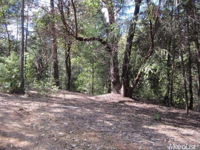 3301 Holiday Lane, Placerville, CA 95667 (MLS #19024299) :: The Del Real Group