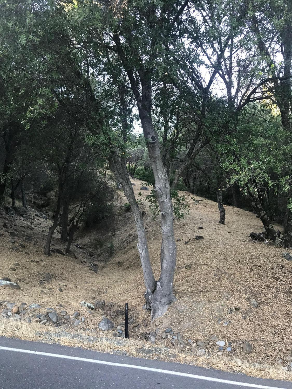 13669 Sun Forest Drive - Photo 1
