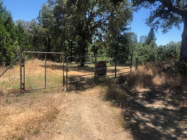 0 Cedar Pines Drive, Fiddletown, CA 95629 (MLS #19049278) :: REMAX Executive