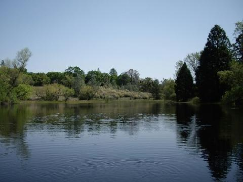 2409 Apache Pass Road, Somerset, CA 95684 (MLS #19056501) :: Keller Williams - Rachel Adams Group