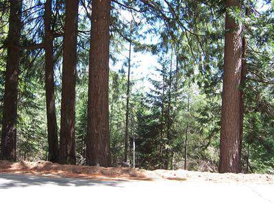 0 Grizzly Flat Road, Grizzly Flats, CA 95636 (MLS #20002493) :: Folsom Realty