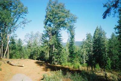 5130 Woodhaven Drive, Grizzly Flats, CA 95636 (MLS #20003289) :: Folsom Realty