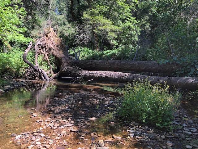 9-AC West Canyon Creek, Georgetown, CA 95634 (MLS #20039188) :: Deb Brittan Team