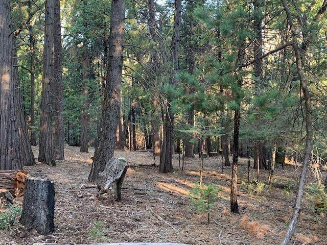 19251 Golden Meadow Drive, Volcano, CA 95689 (MLS #20040031) :: Heidi Phong Real Estate Team